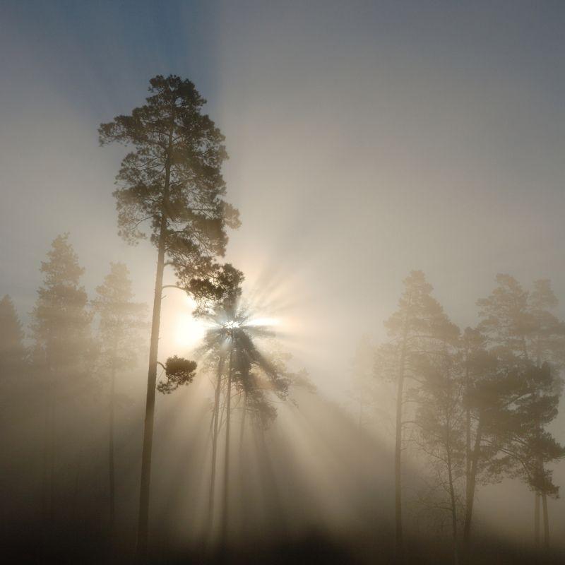 туман Ночь пройдет, наступит утро ясное... Солнце взойдет!photo preview