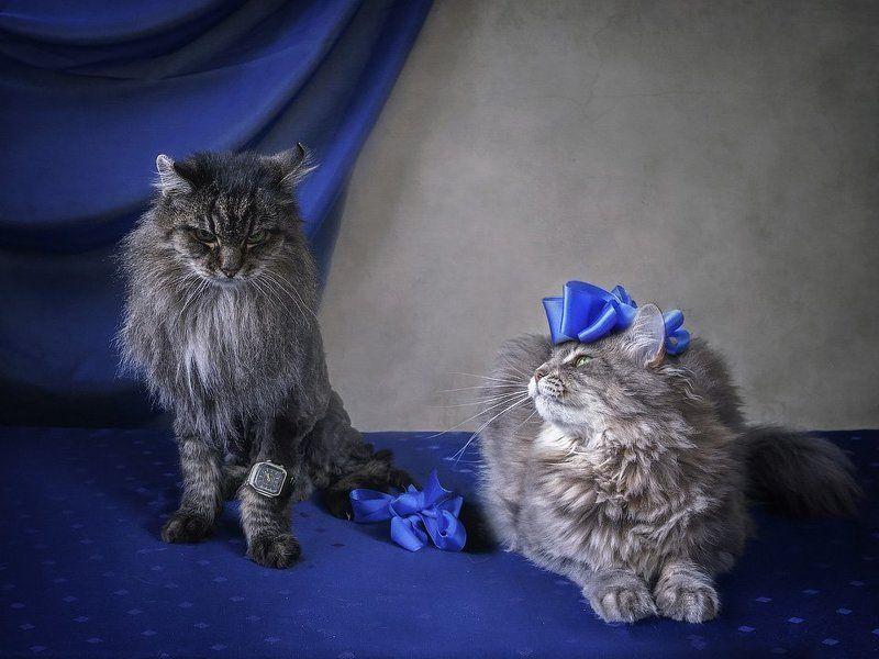 фото, животные, домашние питомцы, кошки, кот Мейсон, кошка Масяня Мальвина и пудель Артемонphoto preview
