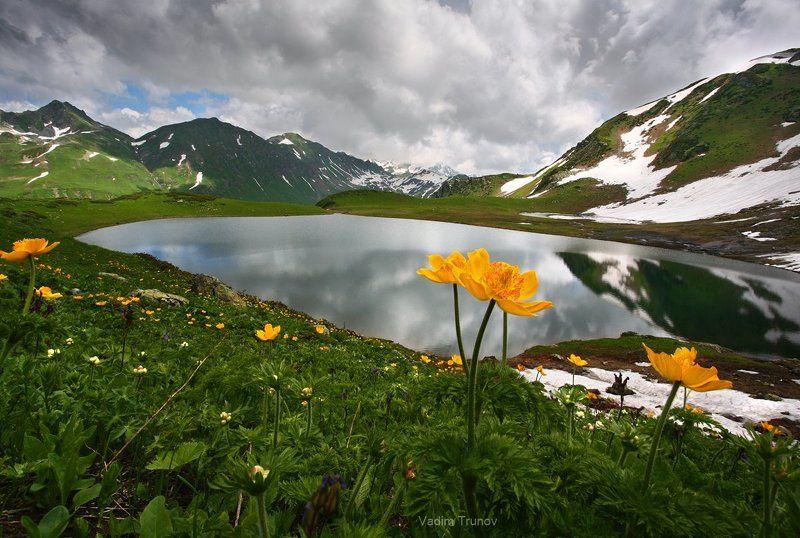 Цветы высокогорного озераphoto preview