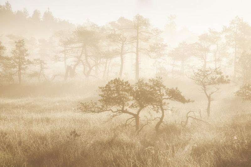 болото туман латвия Kemeriphoto preview
