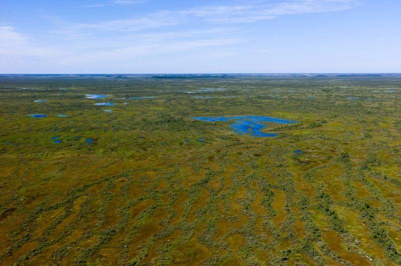 Васюган болото Сибирь Большое Васюганское болотоphoto preview