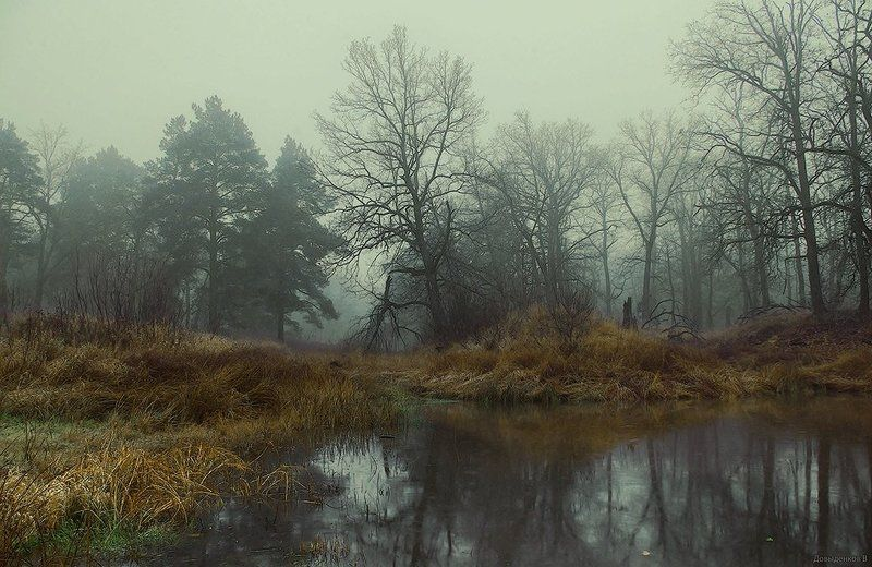 осень, дубы, болото Дубы - колдуны.photo preview