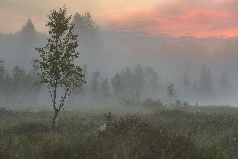 болото, питер, пейзаж, рассвет, туман, пейзаж Ещё один рассвет...photo preview