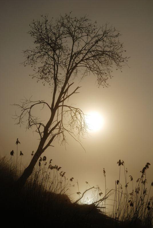 туман Туманное утроphoto preview