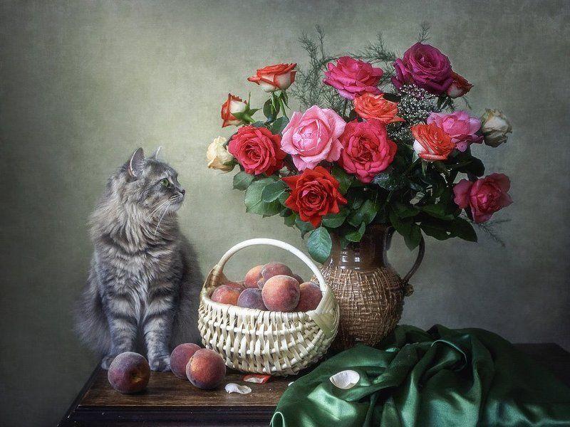 цветочный натюрморт, лето, букет садовых роз, корзина персиков, кошка Масяня Любование красотойphoto preview