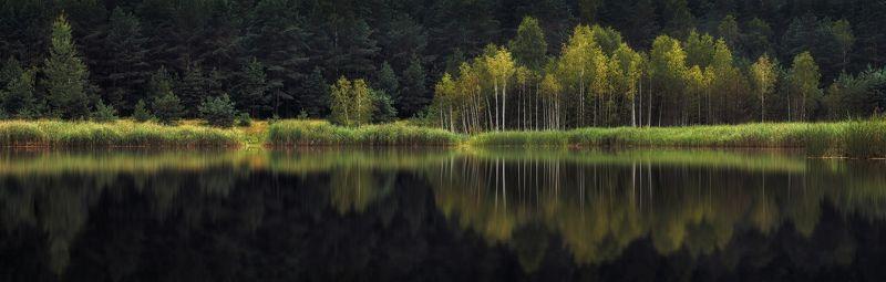 лето, озеро, лес, Отраженияphoto preview