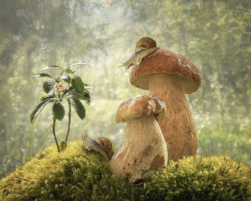 натюрморт, лето, лес, грибы, улитки, мох, зимолюбка Лесные историиphoto preview