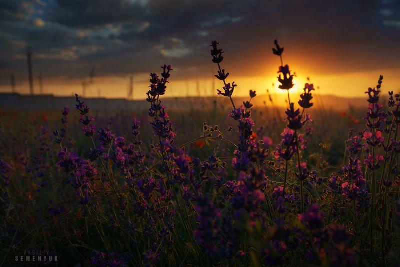 крым, лаванда, поле, солнце, закат. В лаванде - Солнце заблудилось.photo preview