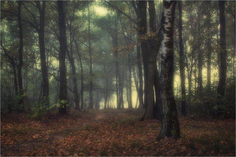 осень, лес, туман, Лесной туманphoto preview