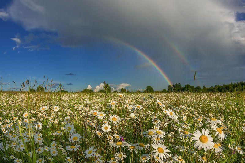 радуга, ромашки, солнце лето  цветы луг про радугу и ромашковую Русьphoto preview