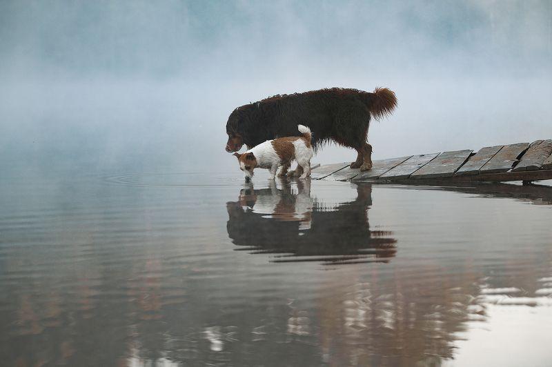 Водопой в тумане...photo preview