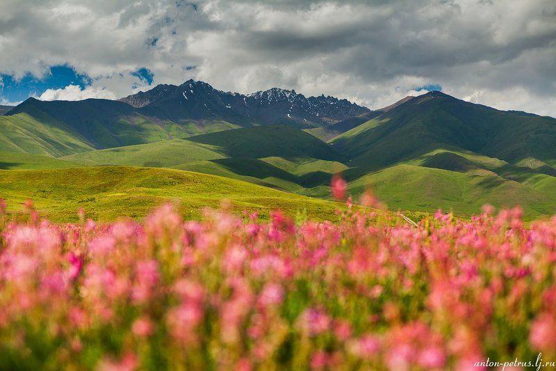 киргизия, закат, горы, небо, Цветущая Киргизияphoto preview