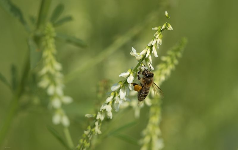 природа, макро Летние заботыphoto preview