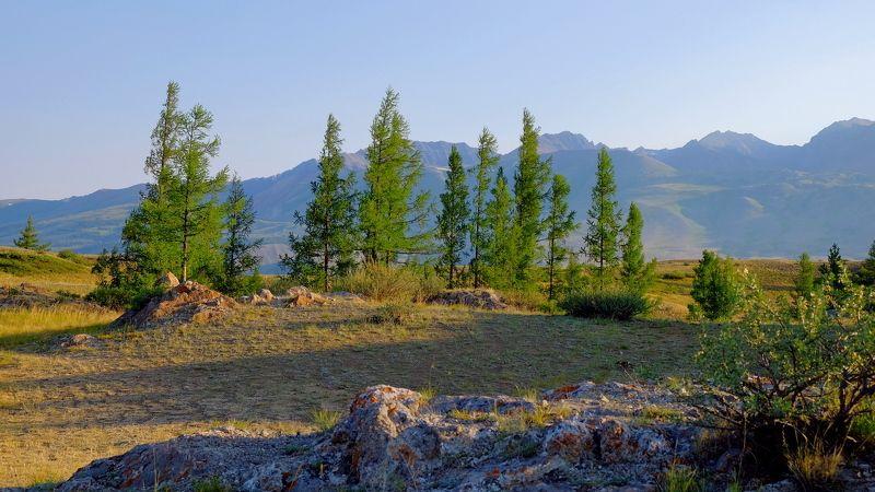 пейзаж, лето, горы, Горный Алтай По утру! photo preview