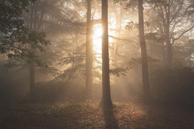 landscape,canon,mist,light,autumn Song of Naturephoto preview