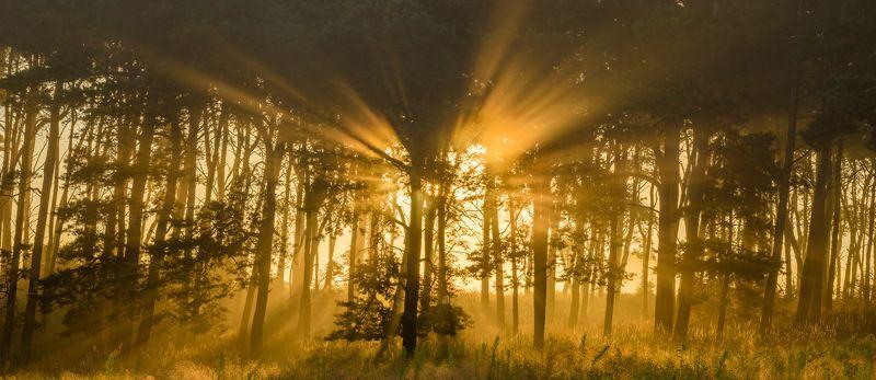 утром, в лесуphoto preview