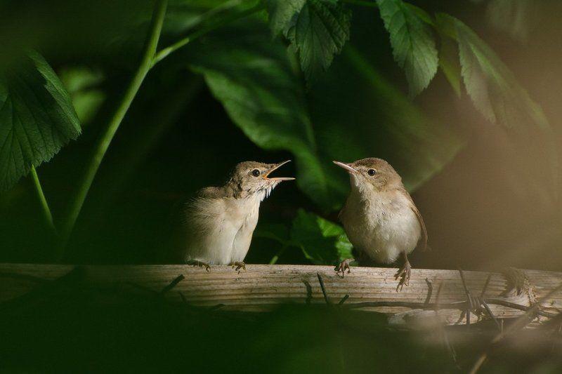 птицы Поговори со мною мамаphoto preview