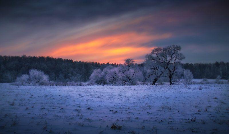 зима, мороз, иней, небо, Предрассветный январьphoto preview