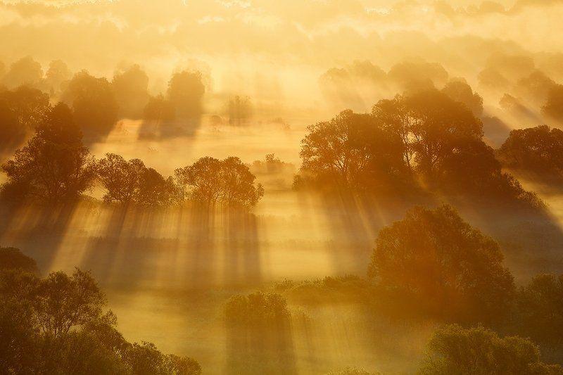 Золотой рассвет.photo preview