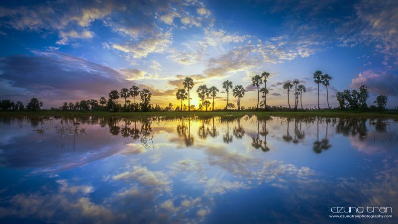 jaggery,an giang,viet nam,reflection Jaggery tree reflectionphoto preview