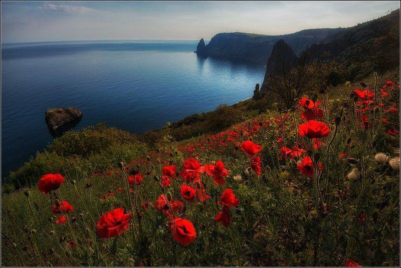 крым, весна, фиолент, маки, море *  *  *photo preview