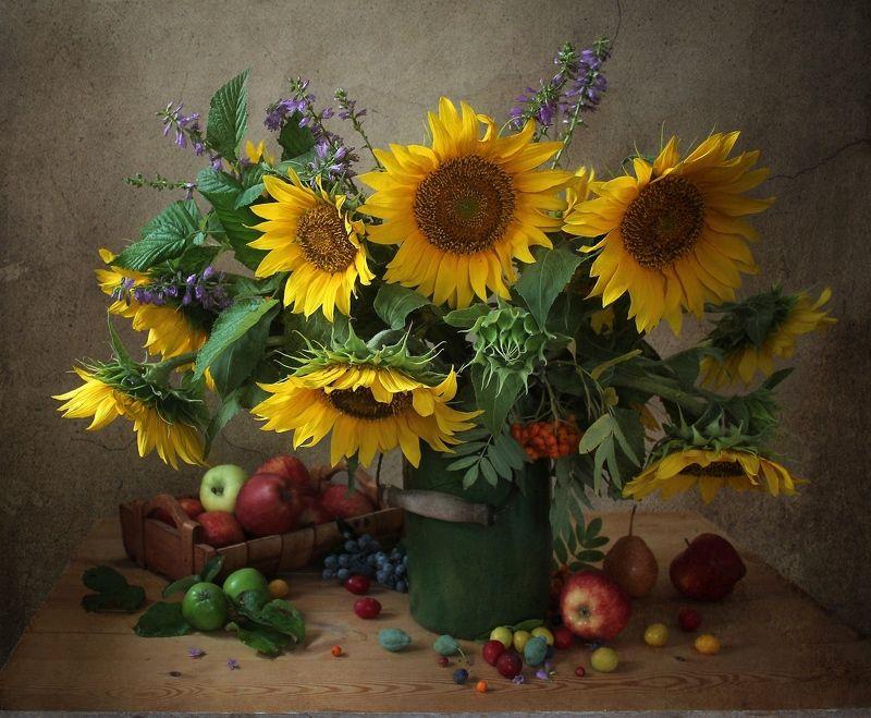натюрморт, цветы, марина филатова, подсолнухи, яблоки Натюрморт с подсолнухами и яблокамиphoto preview