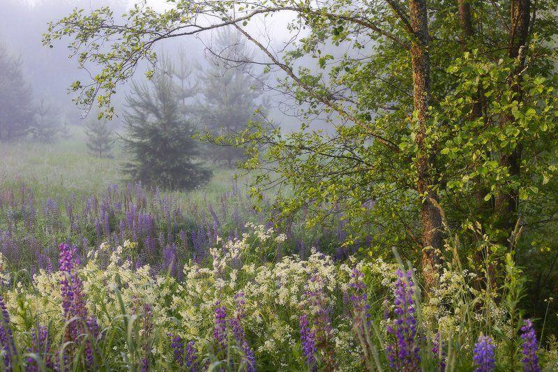 утро туман июль Радости июльского утраphoto preview