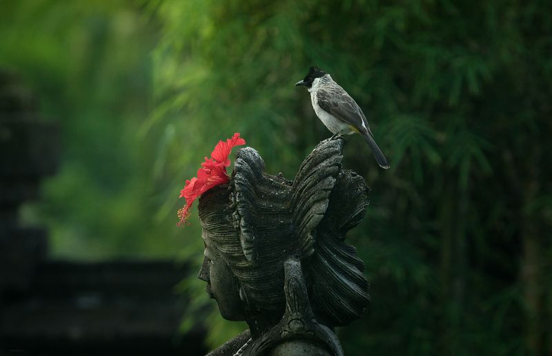 природа, животные, птицы, индонезия В образеphoto preview