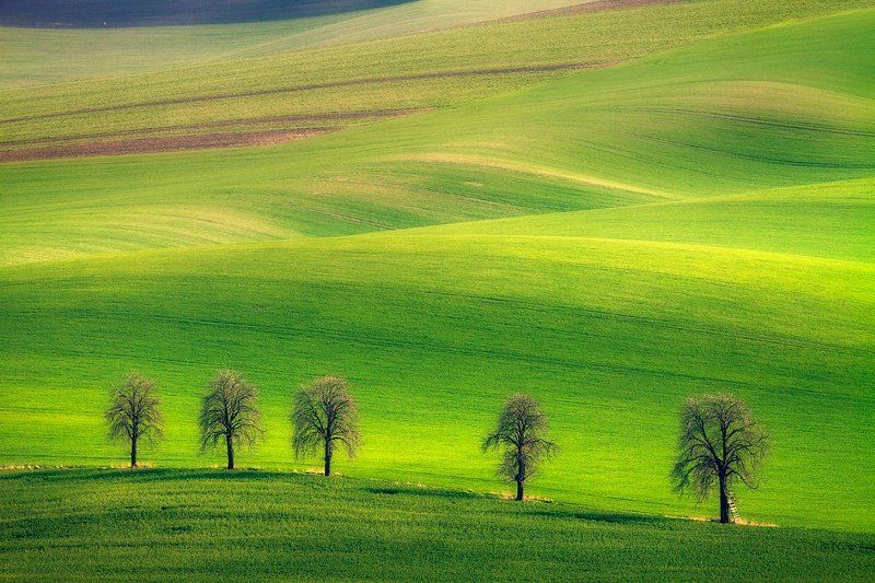 landscape,canon,moravia,light,spring A Little Bit of Green.photo preview