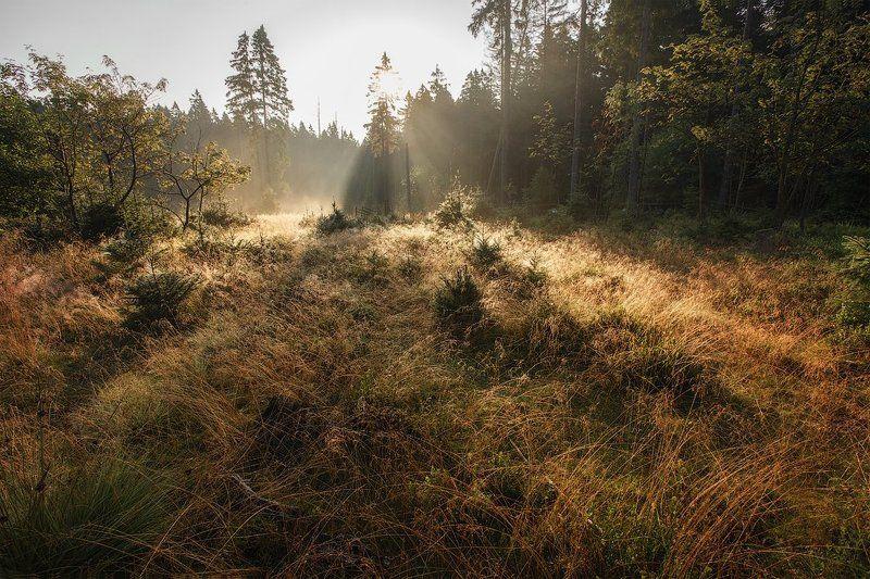 лес пейзаж лето Лесная сказкаphoto preview