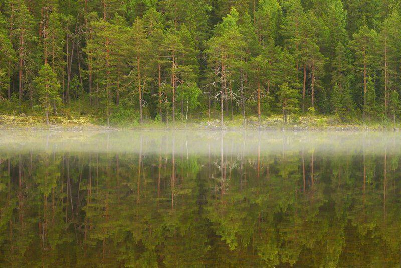 онежское озеро, штиль, отражение, туман Туман в зазеркальеphoto preview