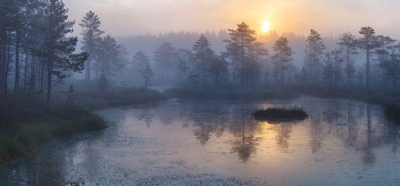 Пейзажи Ленинградской области, природа Ленобласти, болото, топи, болотный дух, туман на болоте  \