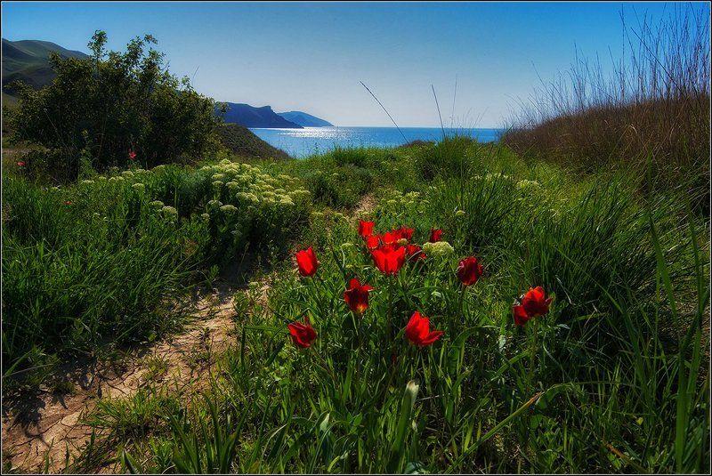крым, весна, коктебель, тюльпаны, море Весна в Крымуphoto preview