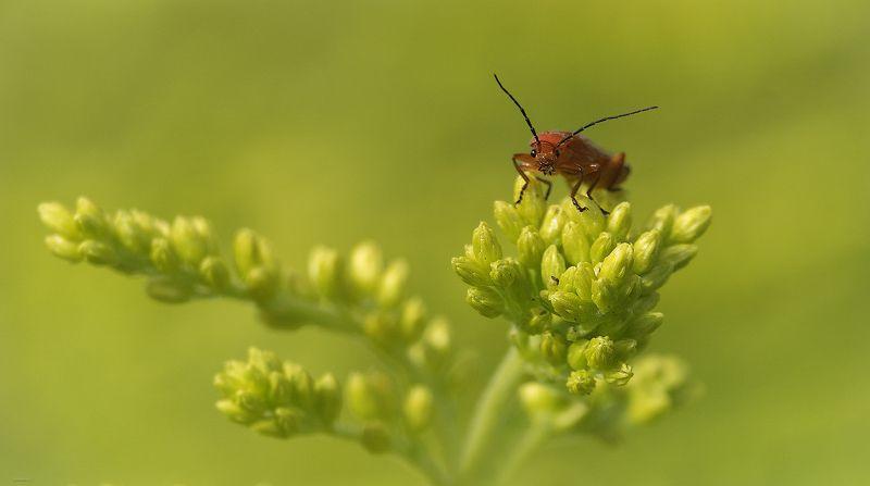 природа, жучки и бабочки, макро Глаза в глазаphoto preview