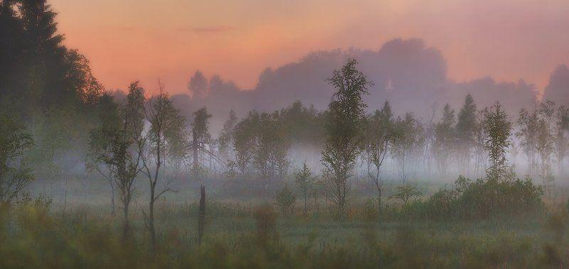 лето, питер, природа лето, туман, рассвет, landscape, пейзаж, болото По ту сторону болота...photo preview