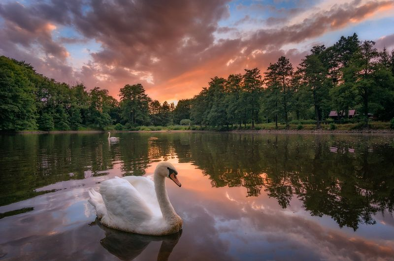 Swan lake sunsetphoto preview