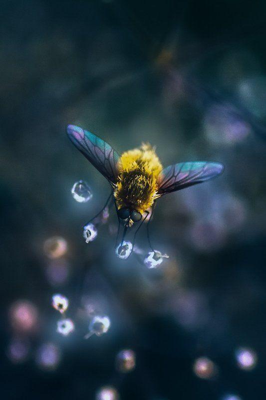 муха, жук, крылья, лист, хобот, свет, муравей, мошки, трава Возвращение в сказку 2photo preview