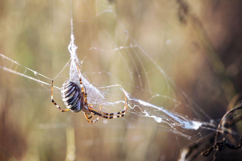 паук,лист,зелень,трава,свет,лапы На шелкахphoto preview