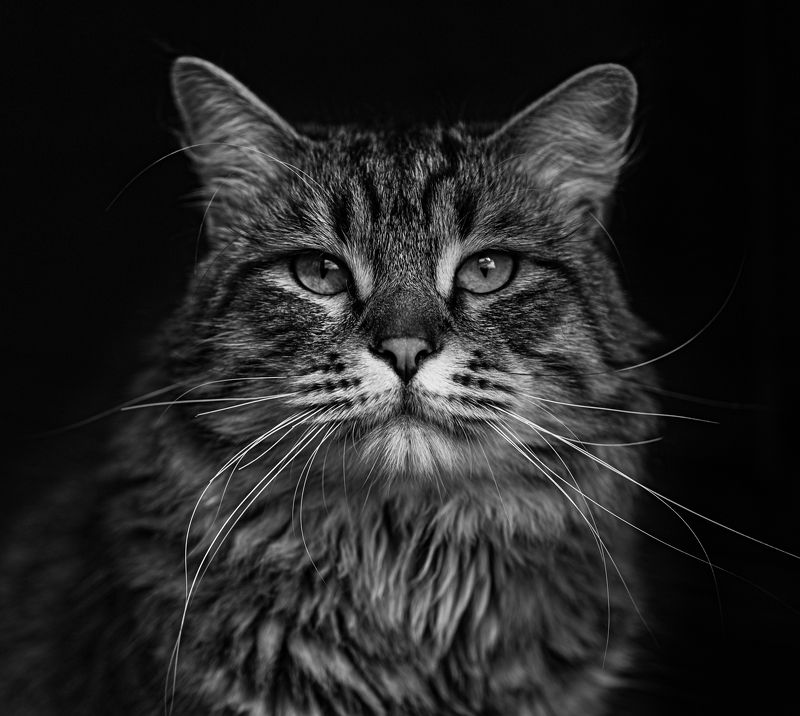 Портрет в низком ключеphoto preview