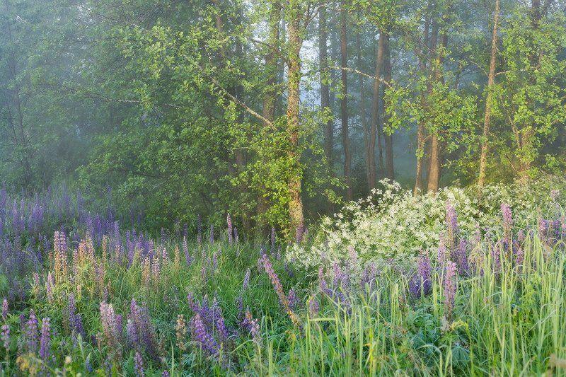 утро туман июль *  *  *photo preview