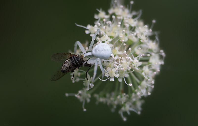 природа, бабочки, , паучки, макро Ужинphoto preview