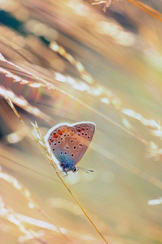 бабоча,жук,трава,дерево,настроение,свет,ель,хвоя Линии светаphoto preview