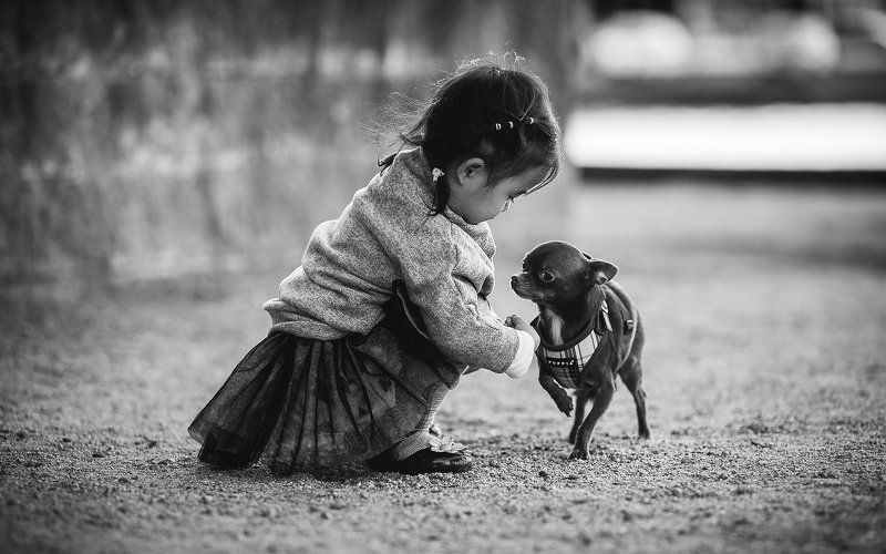 dog, little, girl, kid, childhood, b&w, friends, doggy, chihuahua friendsphoto preview
