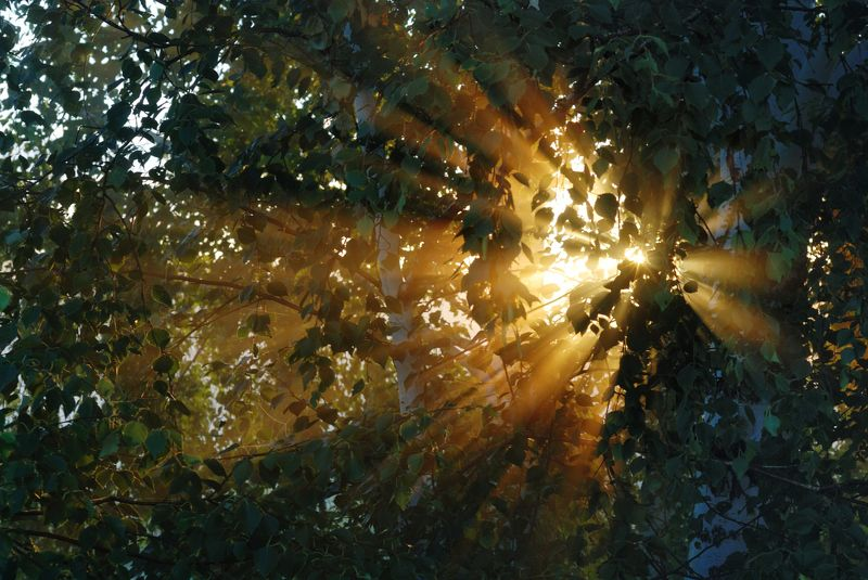 Луч солнца золотогоphoto preview