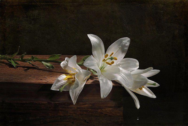 доска,лилии,капли воды Веточка лилииphoto preview