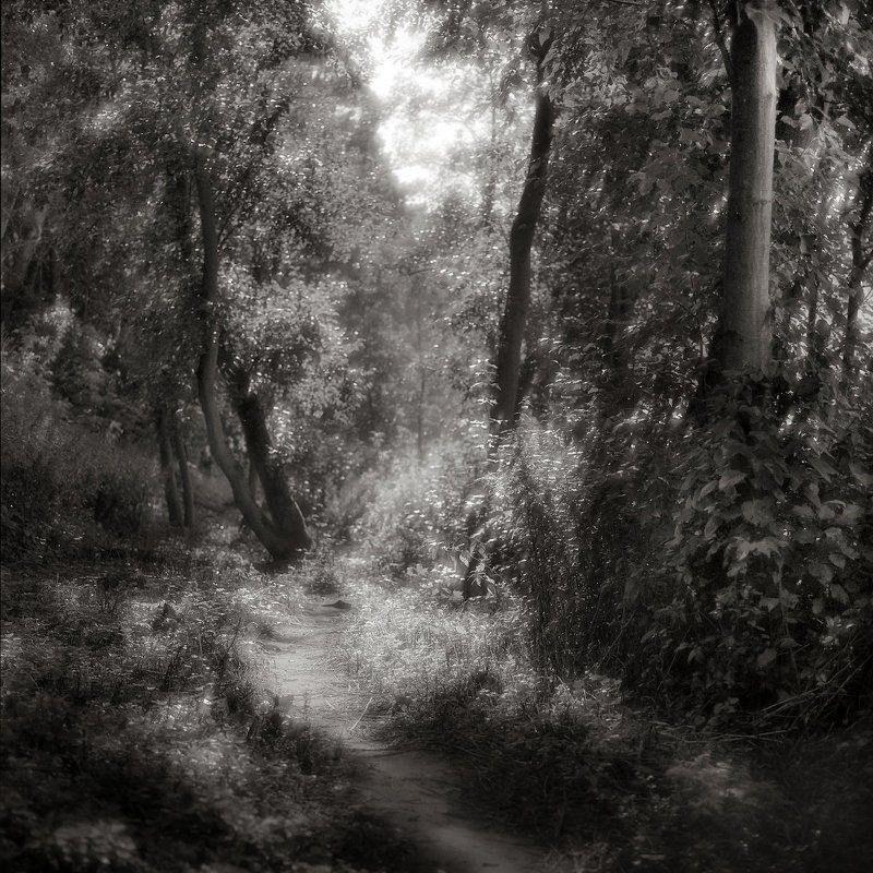 лес. утро, лето, \