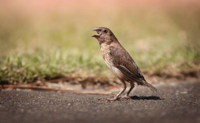 природа, животные, птицы, индонезия Любопытный малышphoto preview