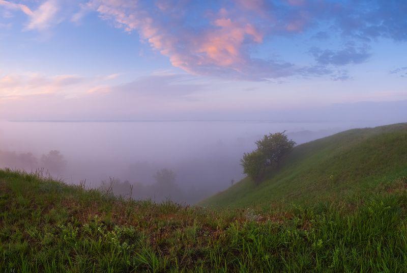 туман, утро, долина, панорама, деревья, холмы, небо, свет, fog, morning, spring, foggy, misty, valley, panorama, light, sky, clouds, trees Туман в долинеphoto preview