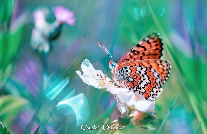 crystal dreams, macro, summer, color, art, nature, butterfly, бабочка, лето, волшебство \