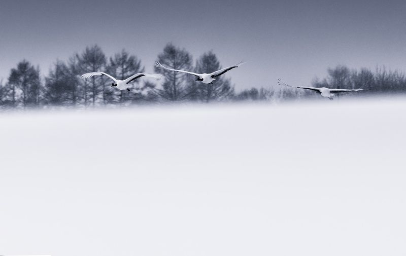 Landing in a snowstormphoto preview